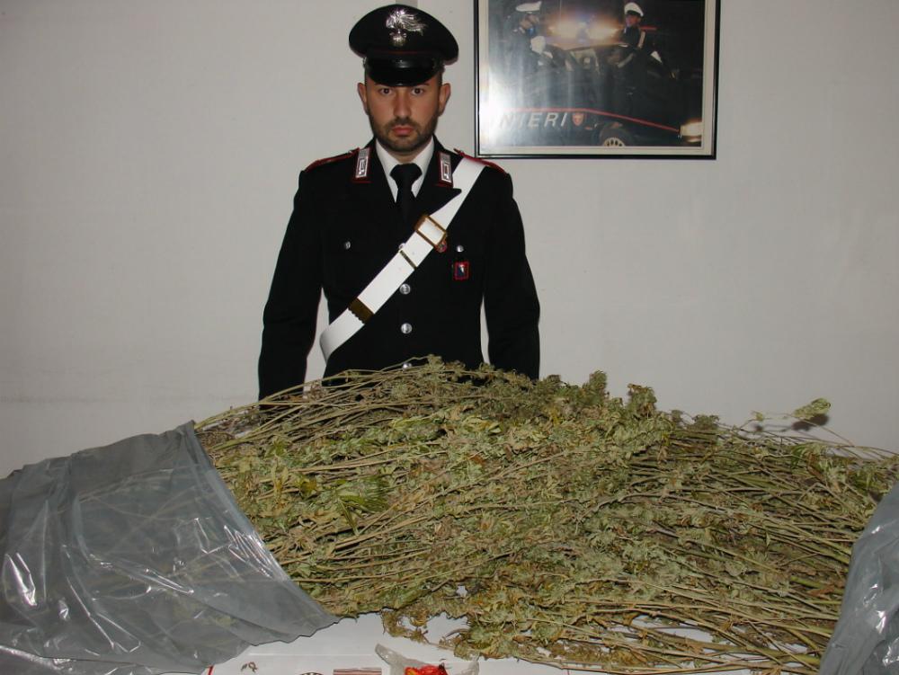 3 5 kg di marijuana in casa arrestato artigiano 32enne di for Piani di casa artigiano stretti