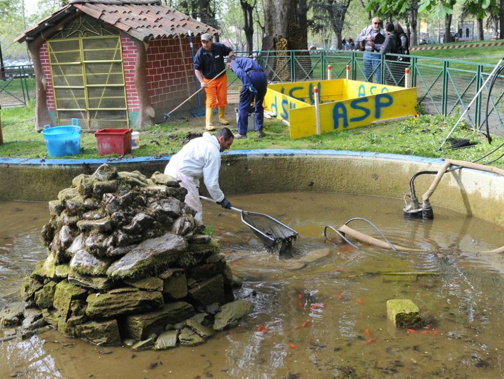 Pulizie al laghetto dei giardini pubblici asp e volontari for Laghetto tartarughe inverno
