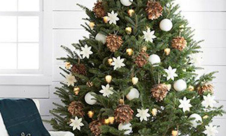 Albero Di Natale Vero Come Farlo Sopravvivere.Come Far Sopravvivere L Abete Di Natale Alle Feste La Nuova Provincia