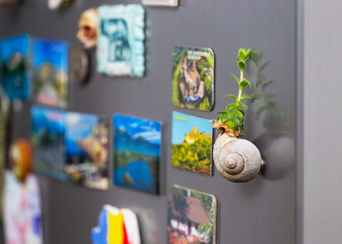 Succulent plant in a snail shell as a mangnet on the fridge