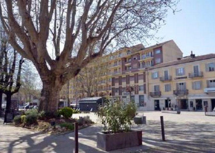 Albero Canelli