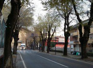 Gli olmi in viale Risorgimento. 27 da abbattere