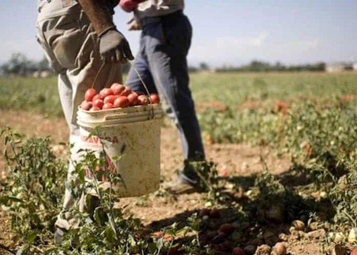 Manodopera in agricoltura