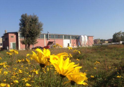 Malteria Monferrato fiore