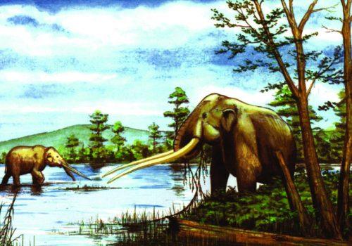 Mastodonte nel Villafranchiano