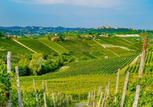 Moscato d'Asti zona di produzione vino dolce piemontese, Canella vigneti, Monferrato