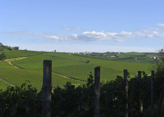 Le vigne dove si produce il Nizza Docg