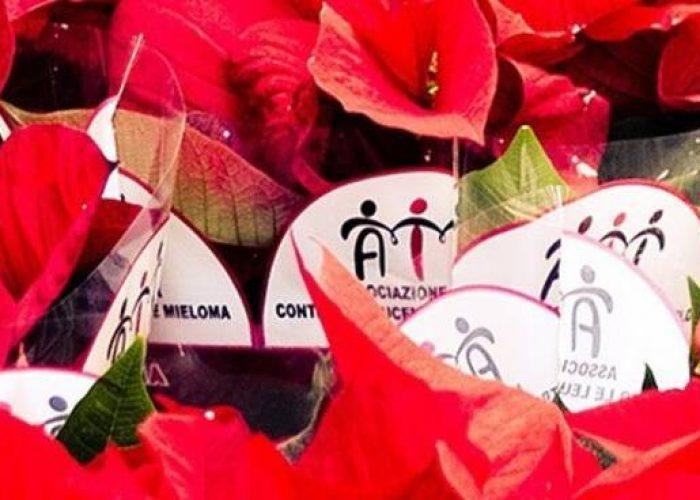 Stella Di Natale Ail 2021.Le Stelle Di Natale E Cioccolato Per Sostenere Le Attivita Dell Ail La Nuova Provincia