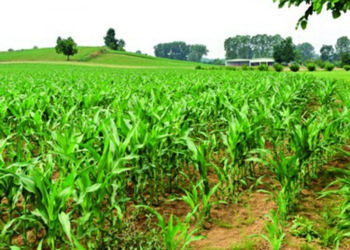 Agricoltura e allevamentoin difficoltà per il caldo