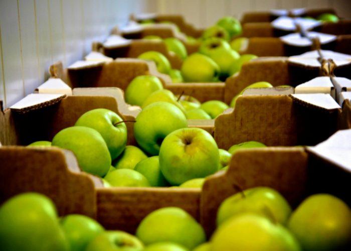 Frutta fresca nelle scuolecon Benessere a colori