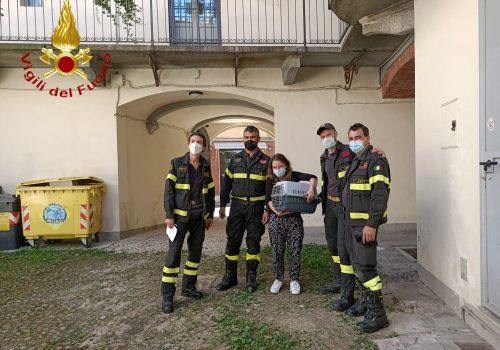 gatto pompieri