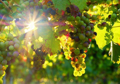 grapes-3550729_960_720