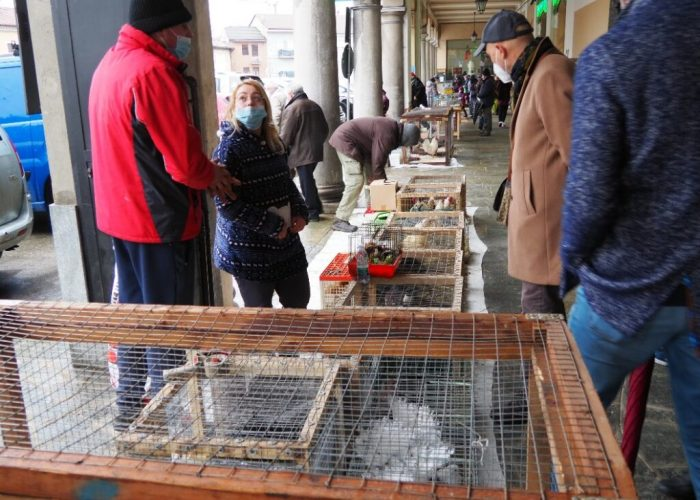 mercatino animali san damiano