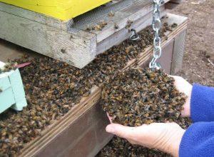 moria-delle-api