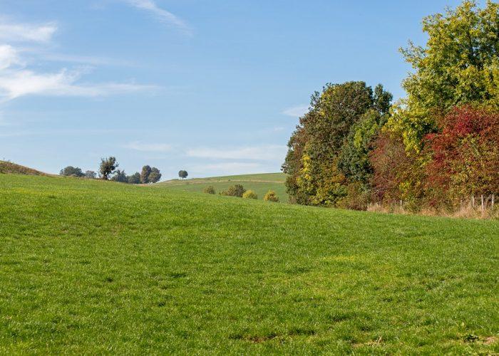 paesaggio collina