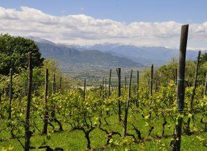 vineyard-4212094_960_720